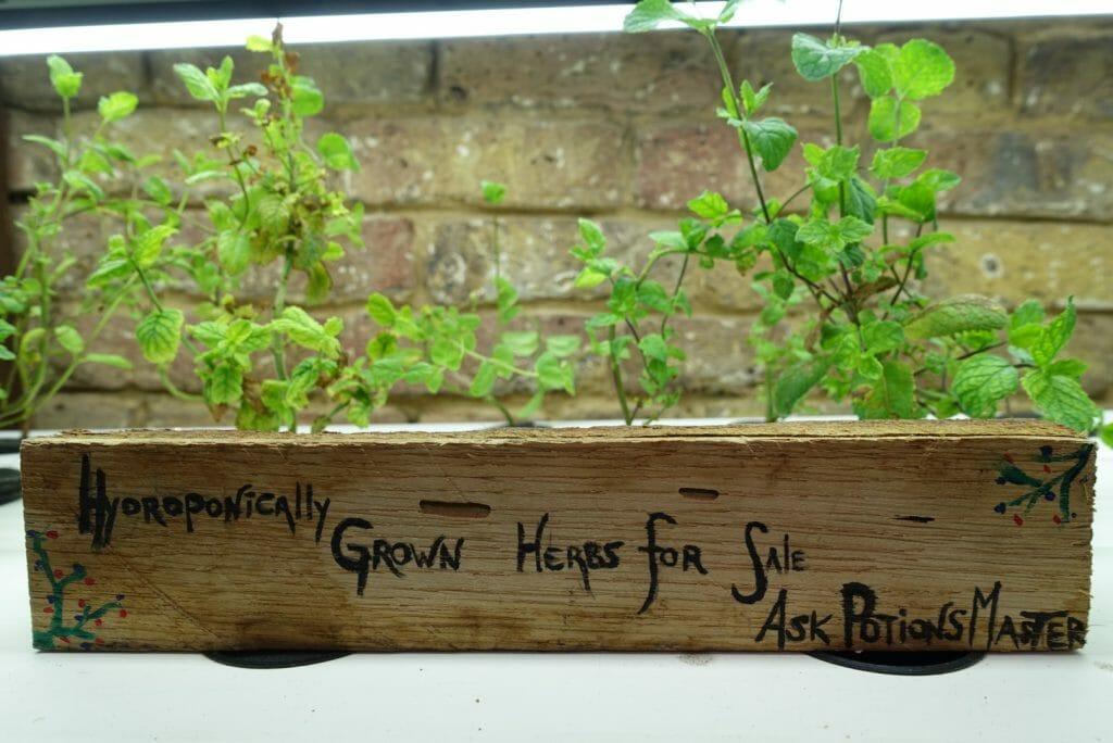 Hydroponically grown plants were hidden behind the wardrobe door!