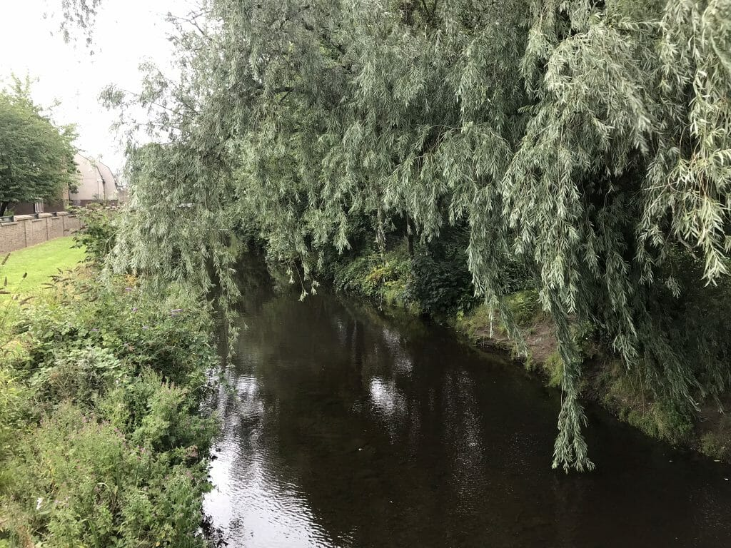 Green trees hanging over the waters of Leith