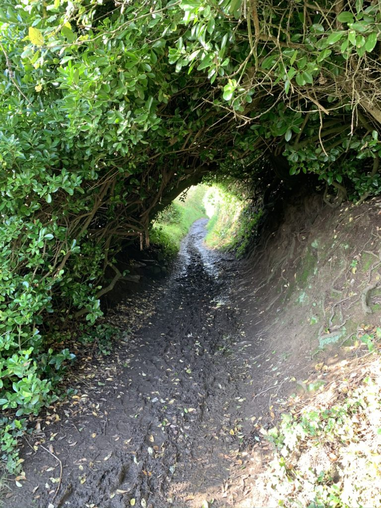Tunnel of greenery with muddy path through